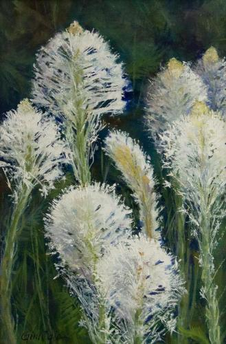 Bountiful Beargrass